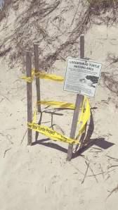 Turtle Nesting Area